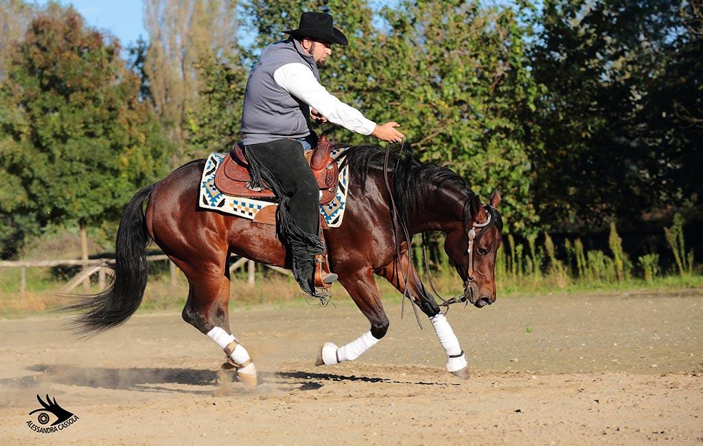 madamareining-addestramento-quarter-horses