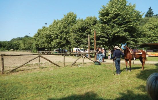 cavalli reining