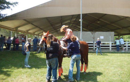corsi di reining