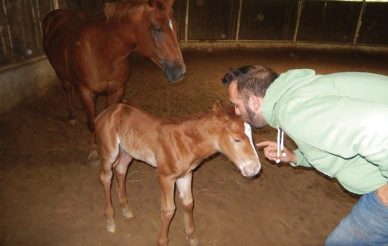 centro ippico madama horses