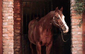 cavallo in pensione