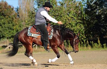 reining-cavalli