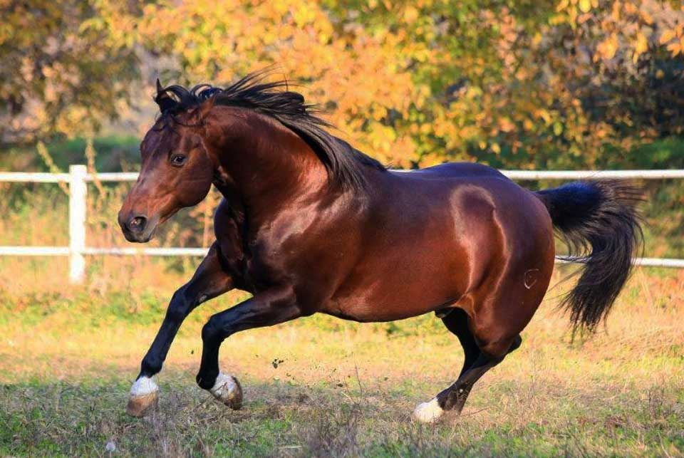 madama horses
