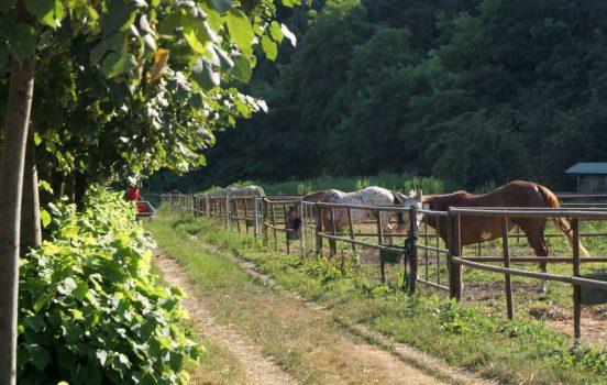 centro di equitazione