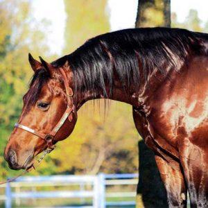 cavalli reining in vendita