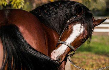 cavalli da reining in vendita