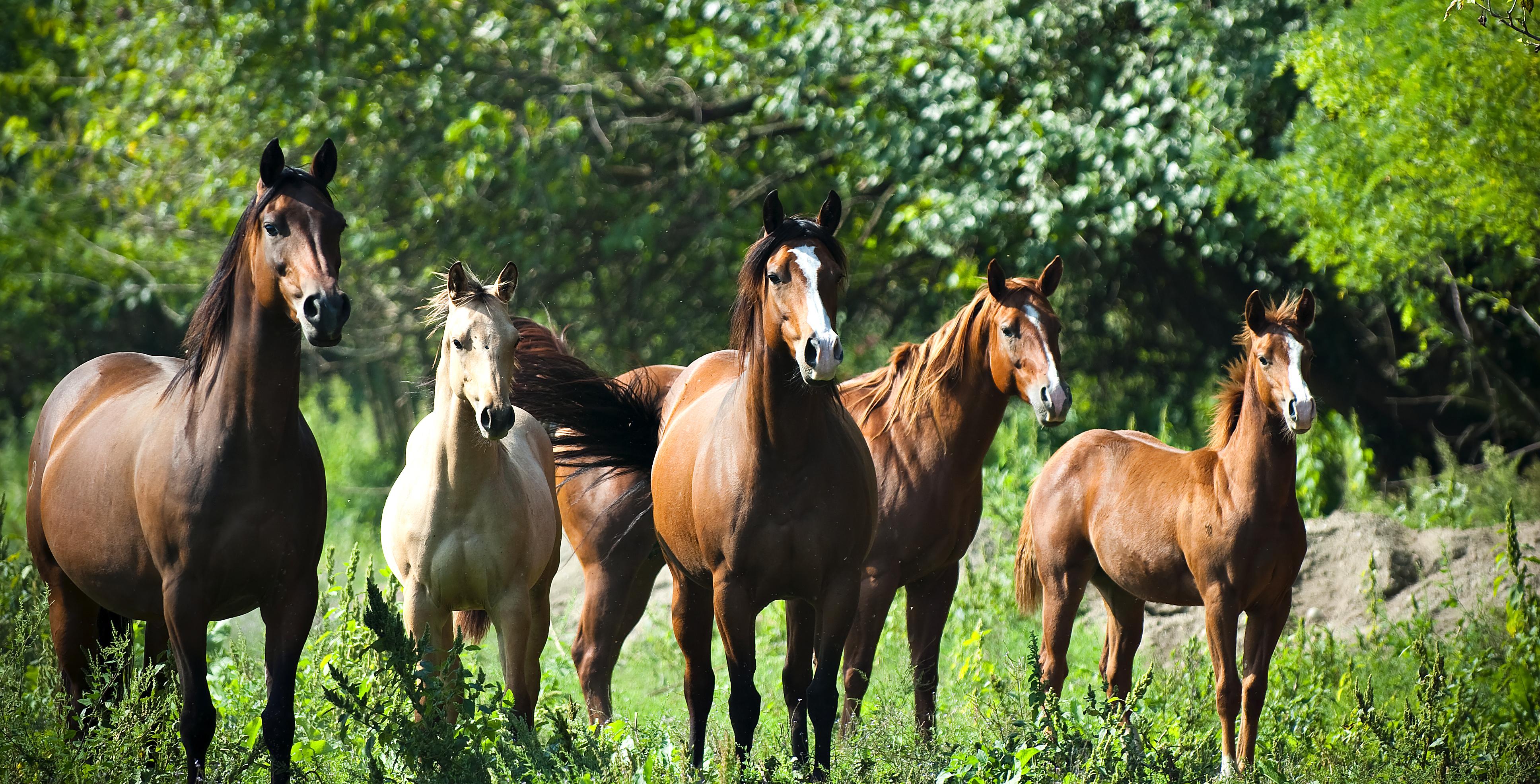 vendita cavalli quarter da reining