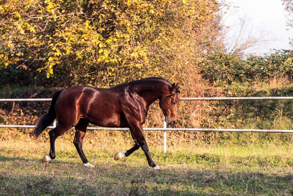 quarter horse da reining in vendita